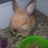 Conejo Toy comiendo