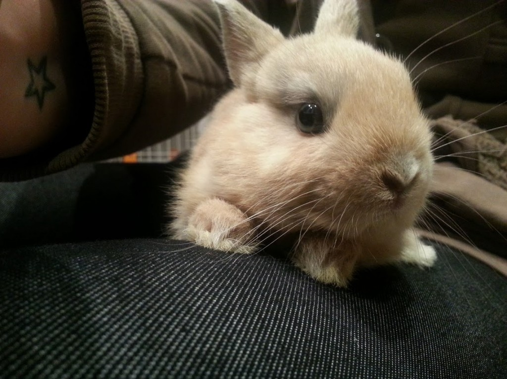 Conejo Toy Lucky