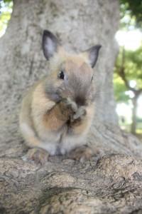Conejo en árbol