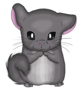 Chinchilla png