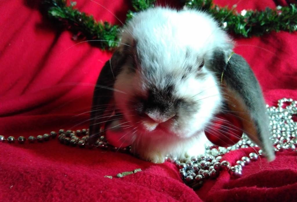 Conejos Navidad DeConejos.com