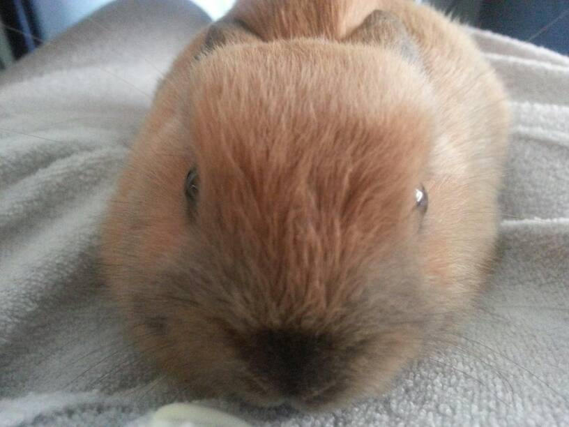 Conejo Toy Bebé