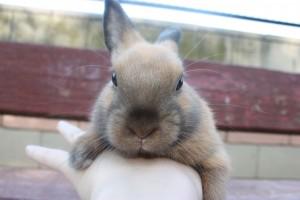 Punky conejo Toy en la calle
