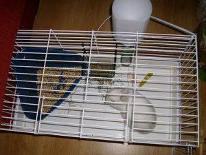 Caja Arena Conejos
